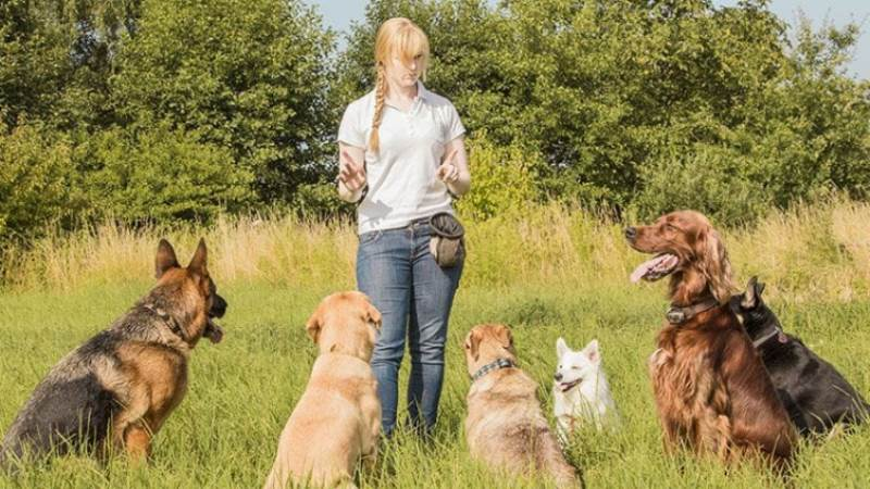 Five Essential Calls All New Dog Owners Need To Make